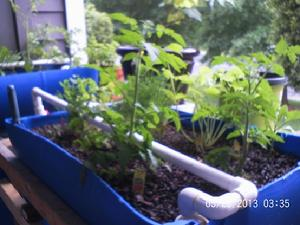 Working Apartment Aquaponics System